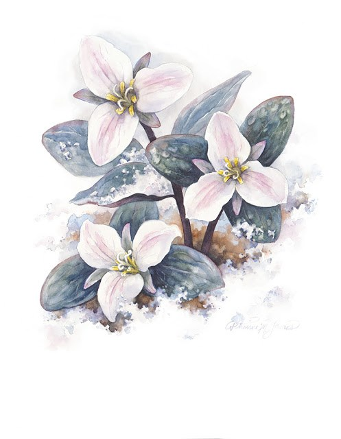 """Trilliums in the Snow"" original fine art by Catherine M. James"