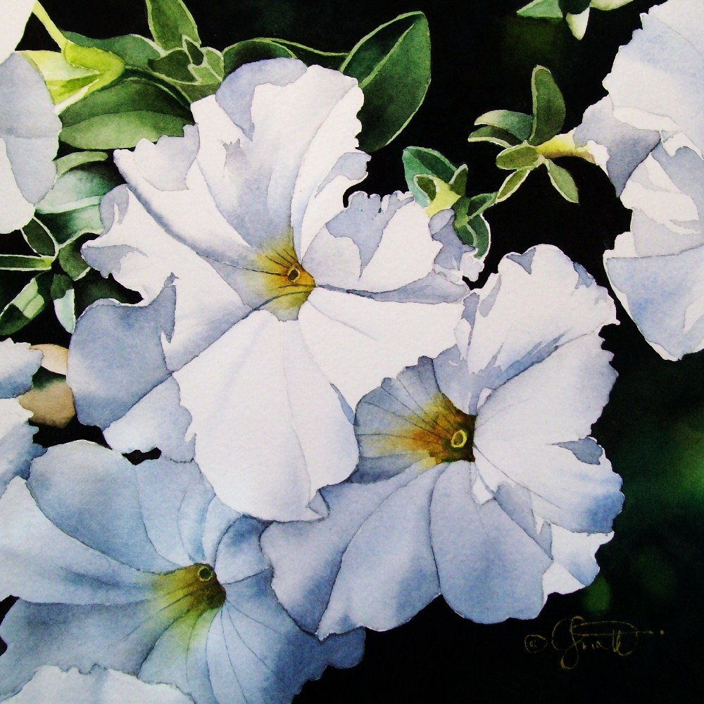 """Summer White Petunias"" original fine art by Jacqueline Gnott, whs"