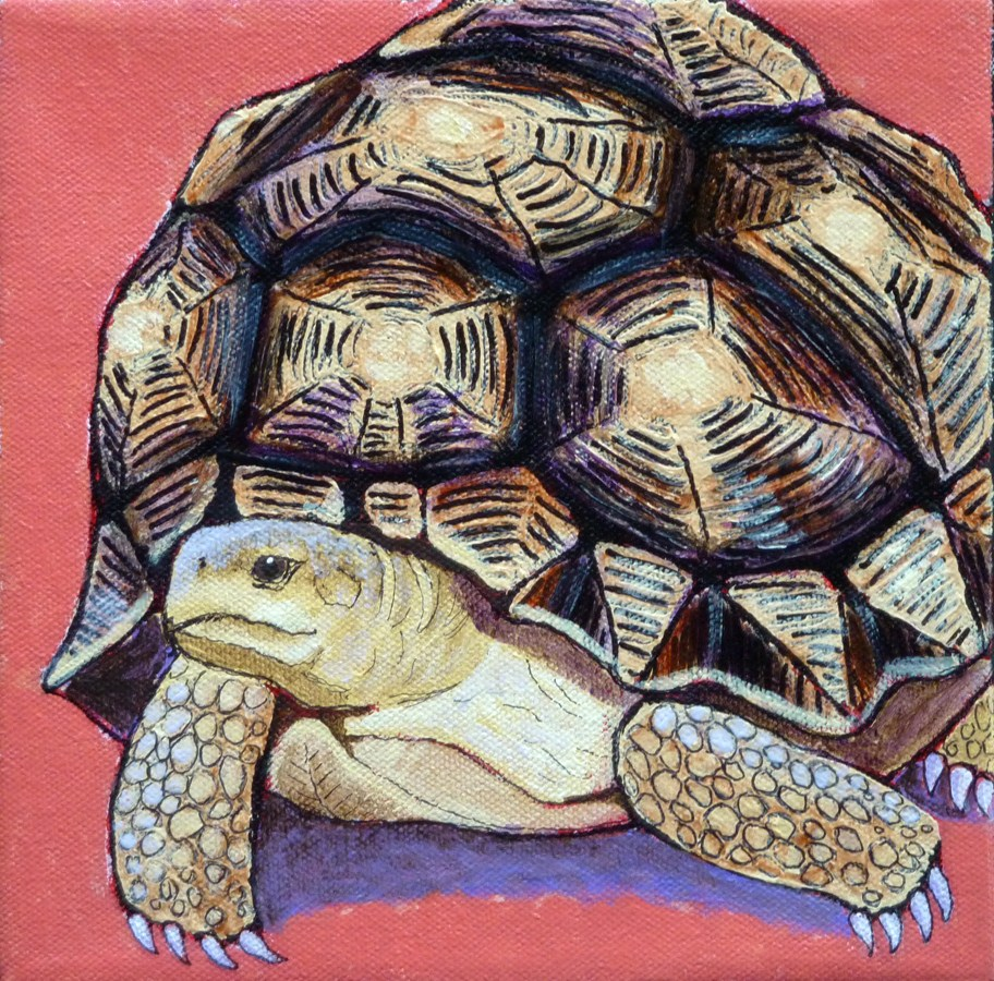 """Madagascar Ploughshare Tortoise"" original fine art by Ande Hall"