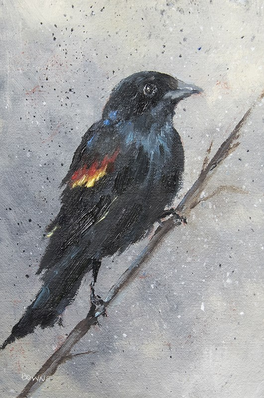 """Red Winged Blackbird"" original fine art by Bonnie Bowne"