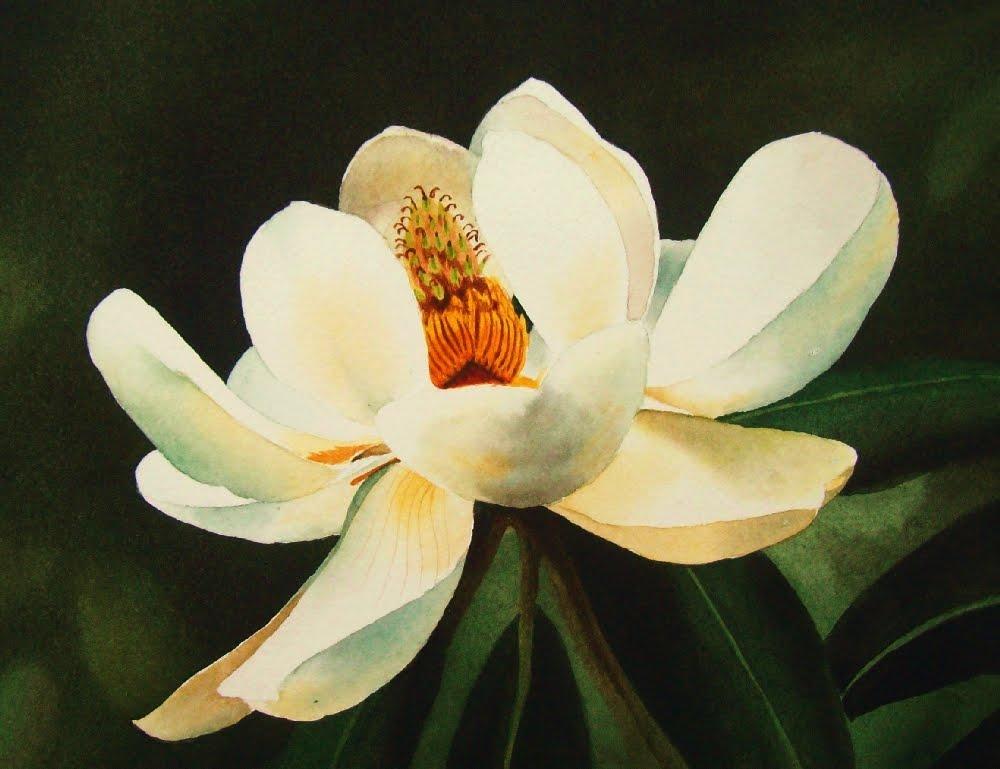 """Southern Magnolia"" original fine art by Jacqueline Gnott, whs"