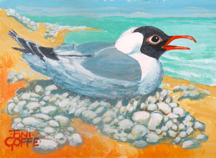 """Black-Headed Gull"" original fine art by Toni Goffe"