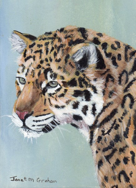 """Jaguar ACEO"" original fine art by Janet Graham"