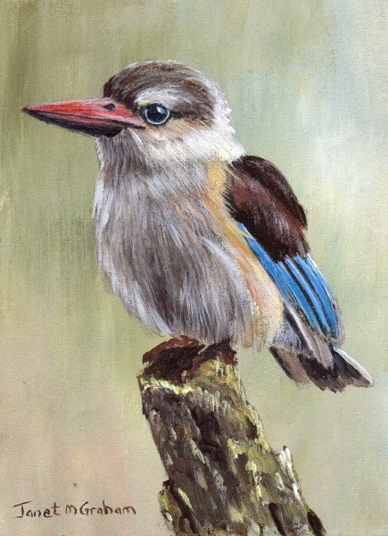 """Brown Hooded Kingfisher ACEO"" original fine art by Janet Graham"