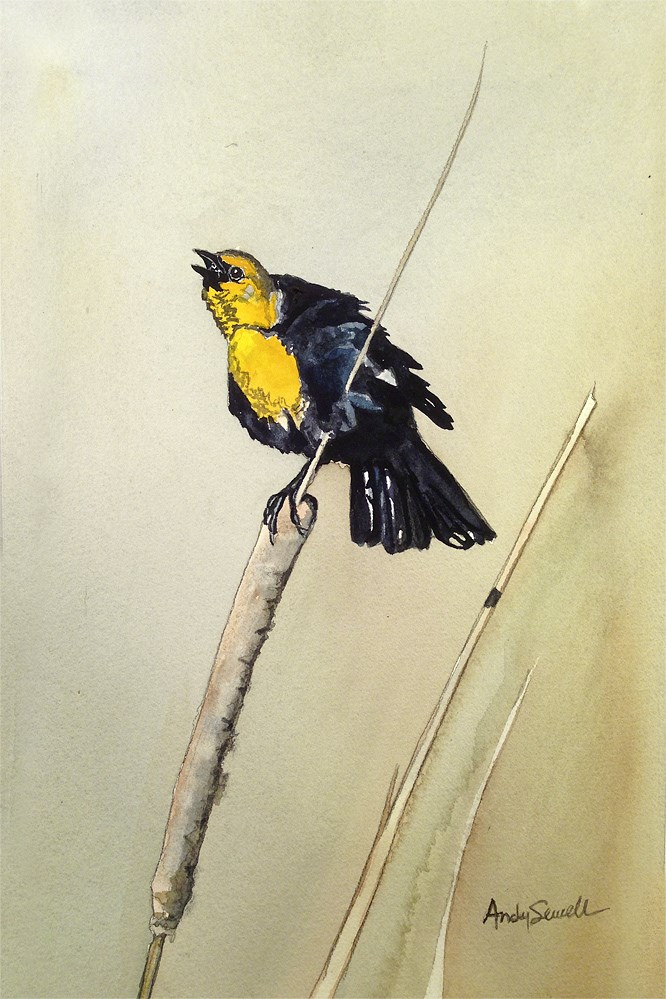 """Y is for Yellow Headed Blackbird"" original fine art by Andy Sewell"