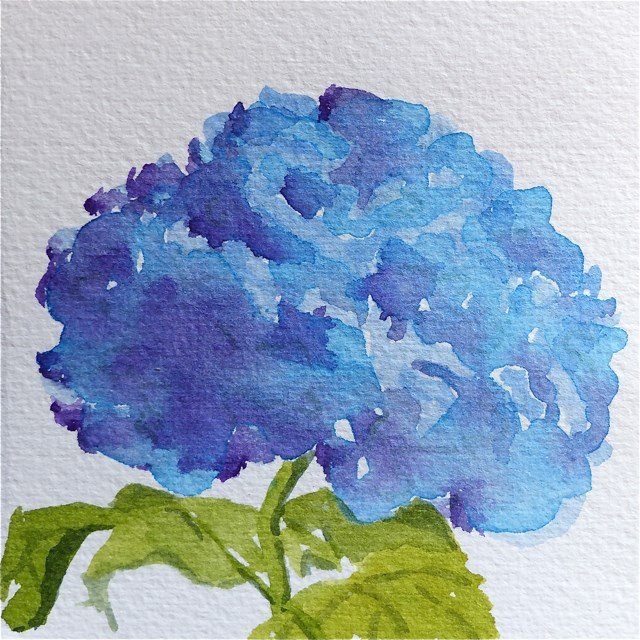 """Hydrangea, tiny sketch"" original fine art by Judith Freeman Clark"