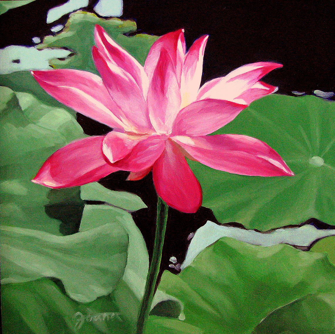 """Pink Water lily"" original fine art by Joanna Bingham"