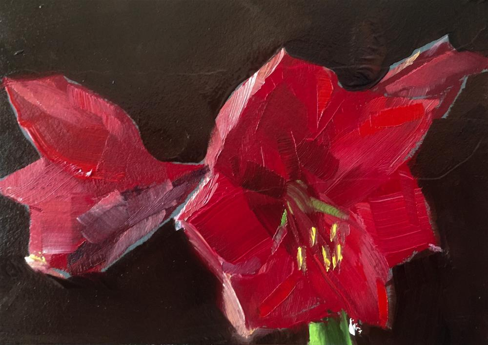 """Amaryllis, Afternoon Light"" original fine art by Gary Bruton"