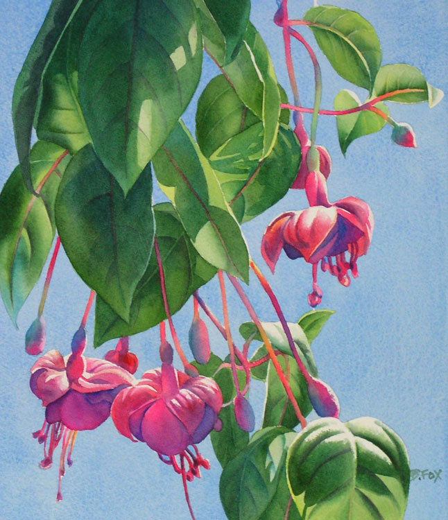 """FUCHSIA DANCE watercolor floral painting"" original fine art by Barbara Fox"