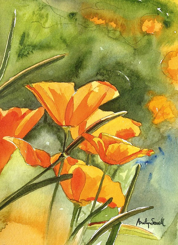 """Poppies in the Sun"" original fine art by Andy Sewell"