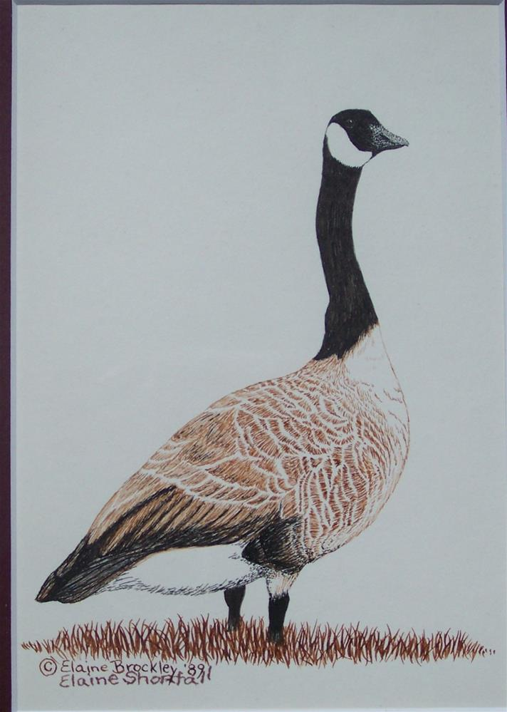 """Canadian Goose"" original fine art by Elaine Shortall"
