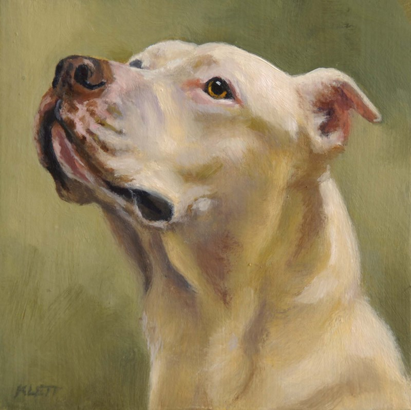"""Bulldog"" original fine art by Tracy Klett"