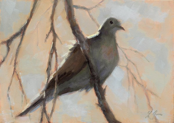 """Perching Dove"" original fine art by Linda Jacobus"