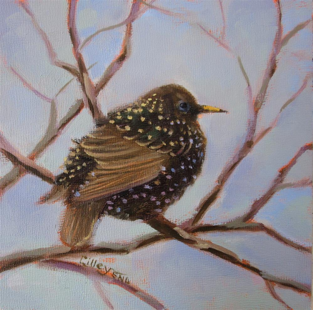 """Lone Starling"" original fine art by Maresa Lilley"