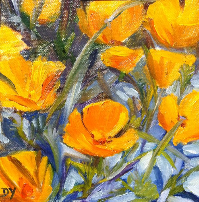 More California Poppies, 6x6 oil on canvas board original fine art by Darlene Young