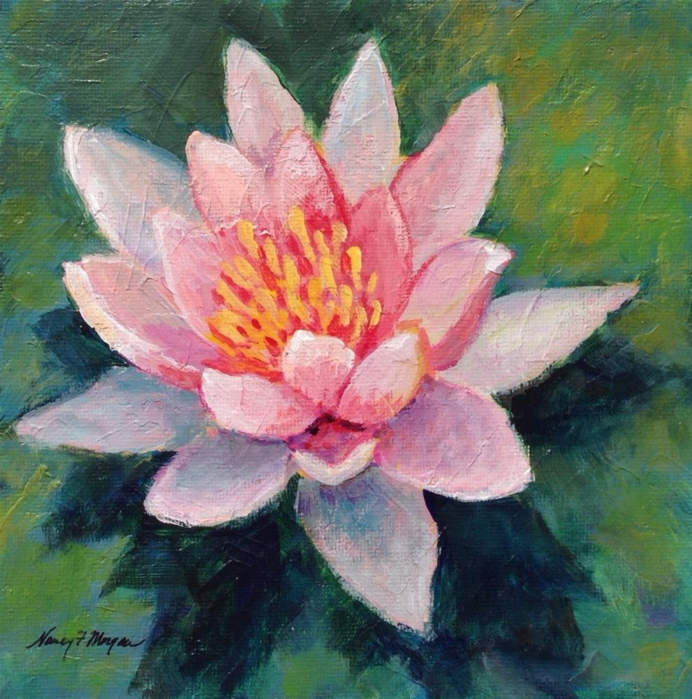 """Pink Water Lily"" original fine art by Nancy F. Morgan"