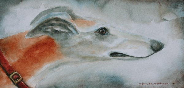 """Greyhound"" original fine art by Jana Johnson"
