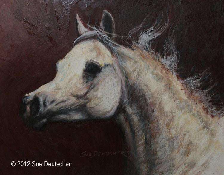 """""""Arabian Horse"""" original fine art by Sue Deutscher"""