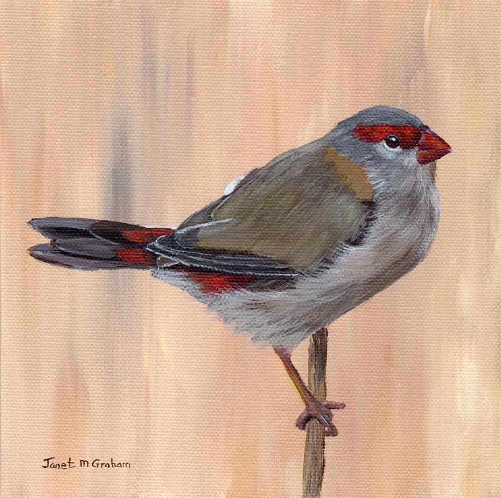"""Red Browed Finch"" original fine art by Janet Graham"