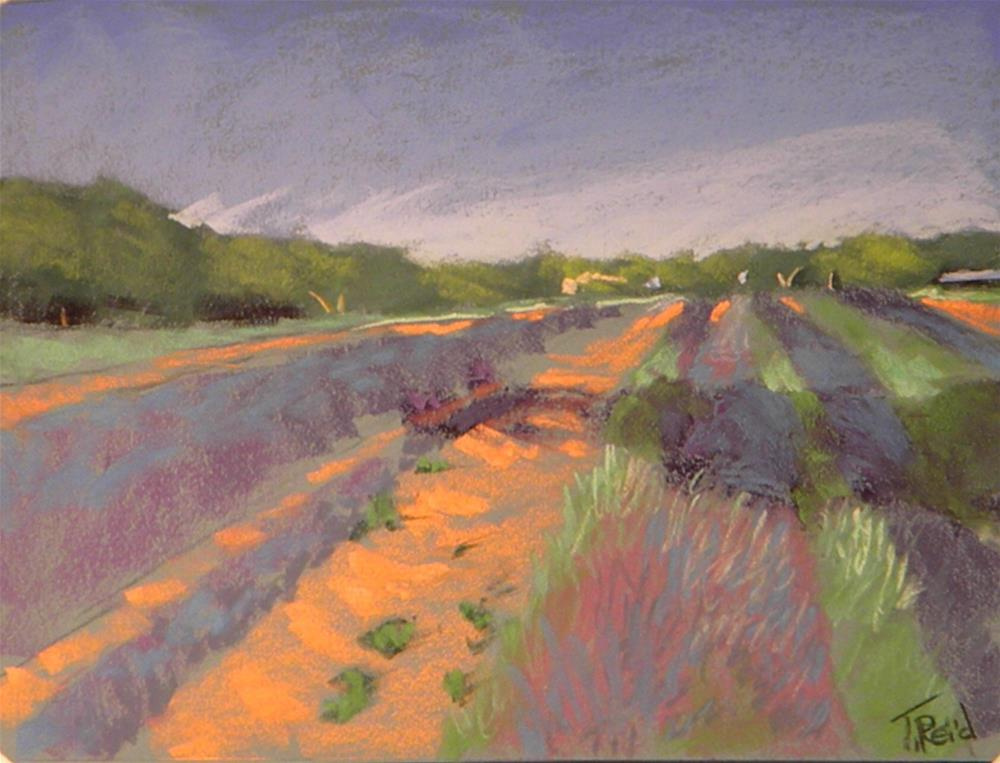 """Lavender fields"" original fine art by Toby Reid"