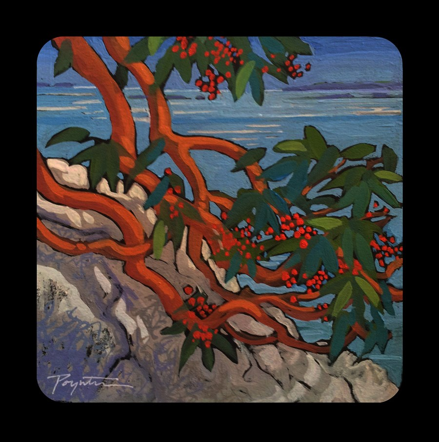 """3.22 Bluff Berry Arbutus"" original fine art by Jan Poynter"