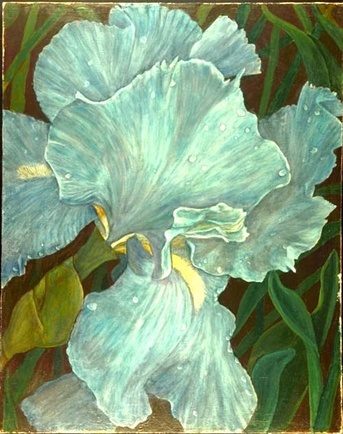 """Blue Iris"" original fine art by Carol Sakai"