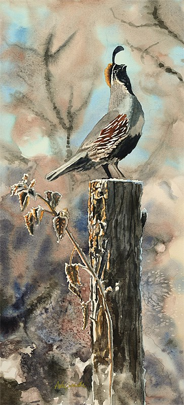 """Q is for Quail"" original fine art by Andy Sewell"