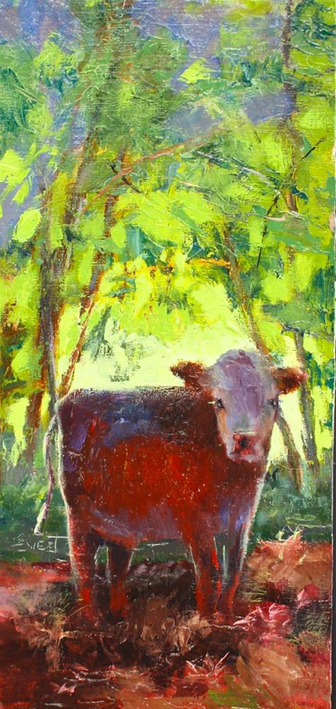 """Yearling Hereford"" original fine art by Pamela Sweet"