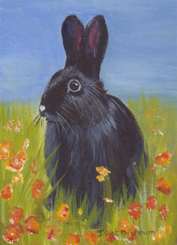 """Rabbit ACEO"" original fine art by Janet Graham"