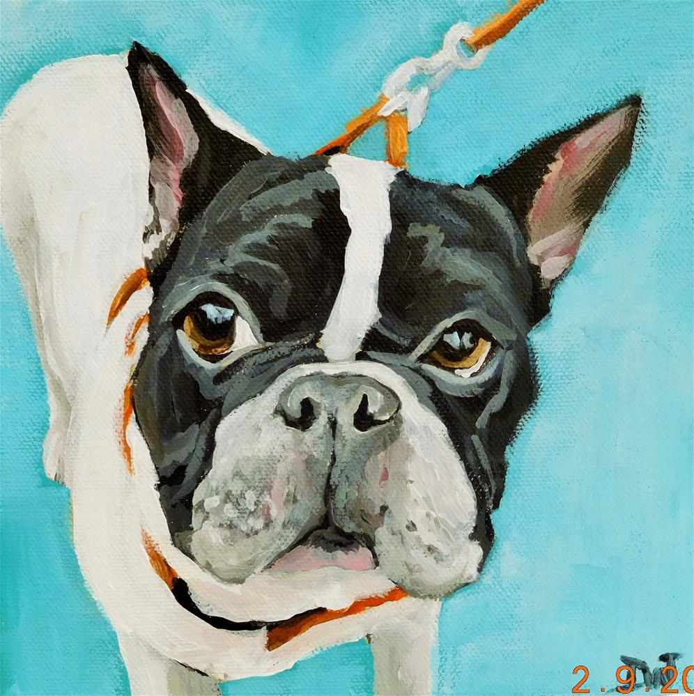 """Boston Terrier 2"" original fine art by Daryl West"