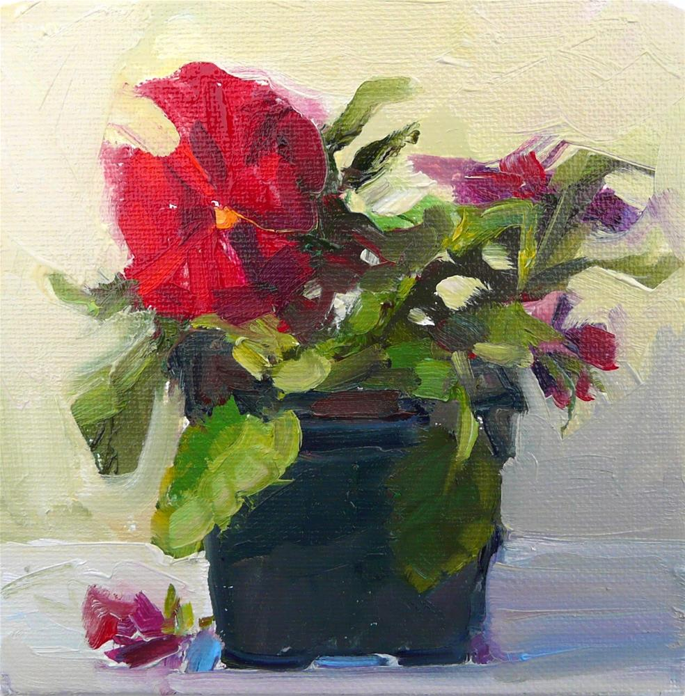 """Redish Pansy,still life,oil on canvas,6x6,priceNFS"" original fine art by Joy Olney"