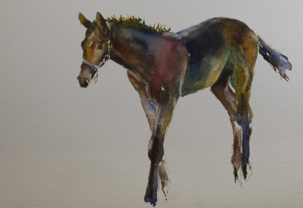 """Kentucky Foal"" original fine art by Sue Churchgrant"