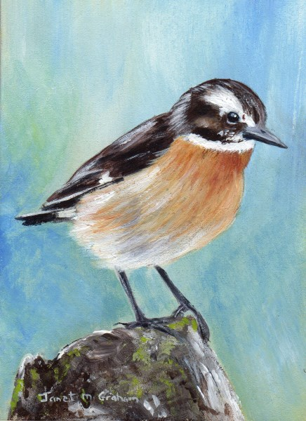 """Whinchat ACEO"" original fine art by Janet Graham"
