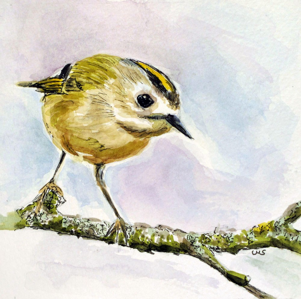 """Goldcrest"" original fine art by Ulrike Miesen-Schuermann"
