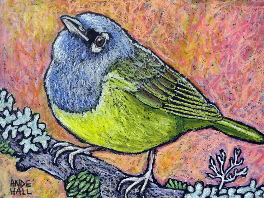 """MacGillivray's Warbler"" original fine art by Ande Hall"
