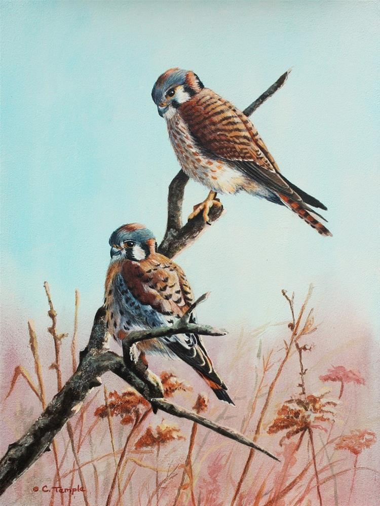 """Kestrel Pair"" original fine art by Catherine Temple"