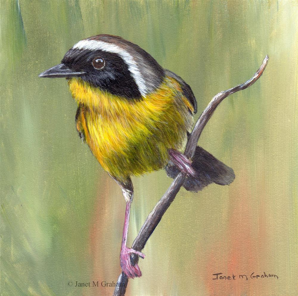 """Common Yellowthroat No 3"" original fine art by Janet Graham"