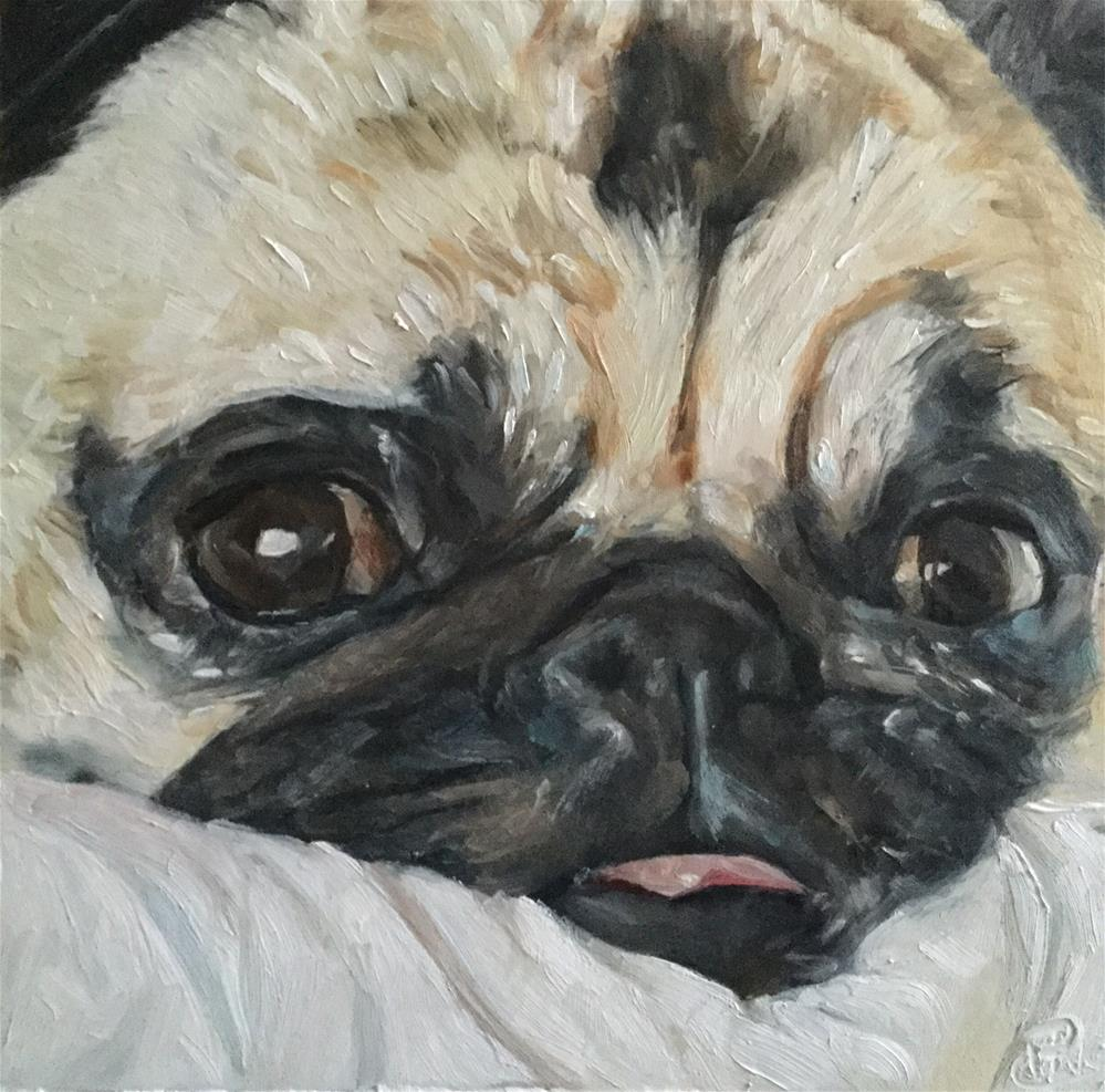 """Pug Face"" original fine art by Paula Howson-Green"