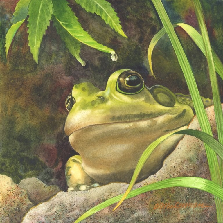"""Absolutely Ribbiting"" original fine art by Connie McLennan"