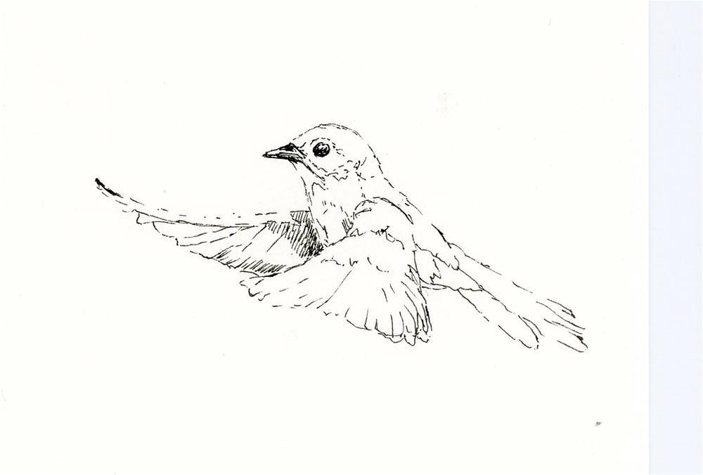 """""""bluebird sketch"""" original fine art by Susanne Billings"""