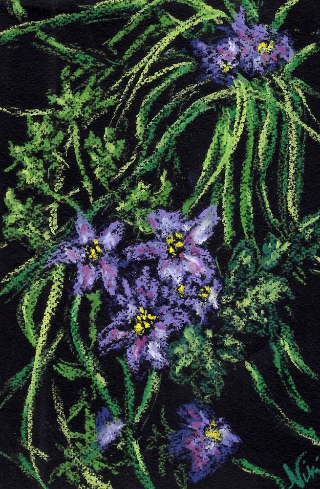 """Delicate Blossoms"" original fine art by Niki Hilsabeck"