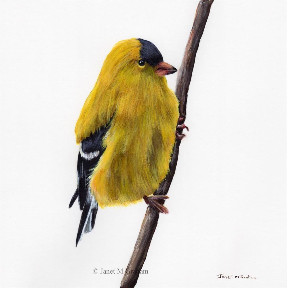 """American Goldfinch"" original fine art by Janet Graham"