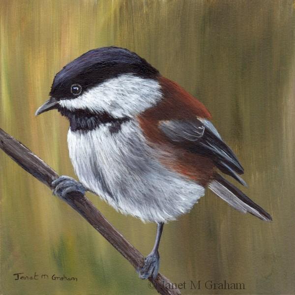 """Chestnut Backed Chickadee"" original fine art by Janet Graham"