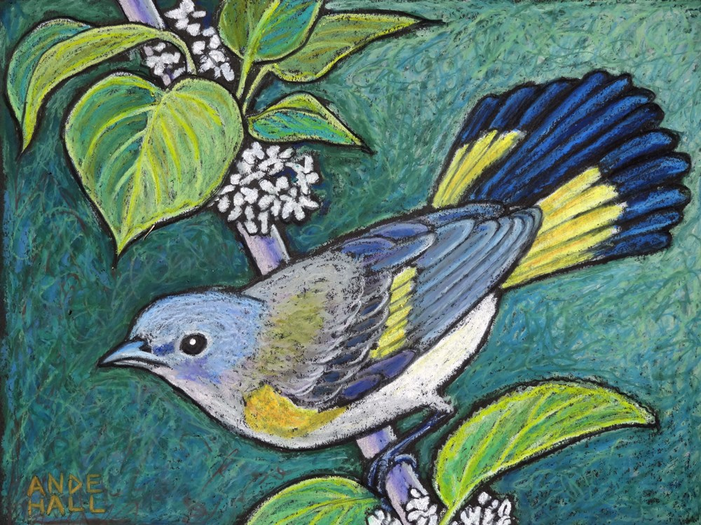 """American Redstart Female"" original fine art by Ande Hall"