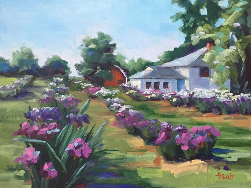 """Iris Farm 2"" original fine art by Andrea Jeris"