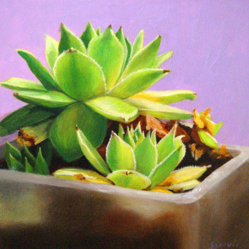 """Echeveria"" original fine art by Susan N Jarvis"