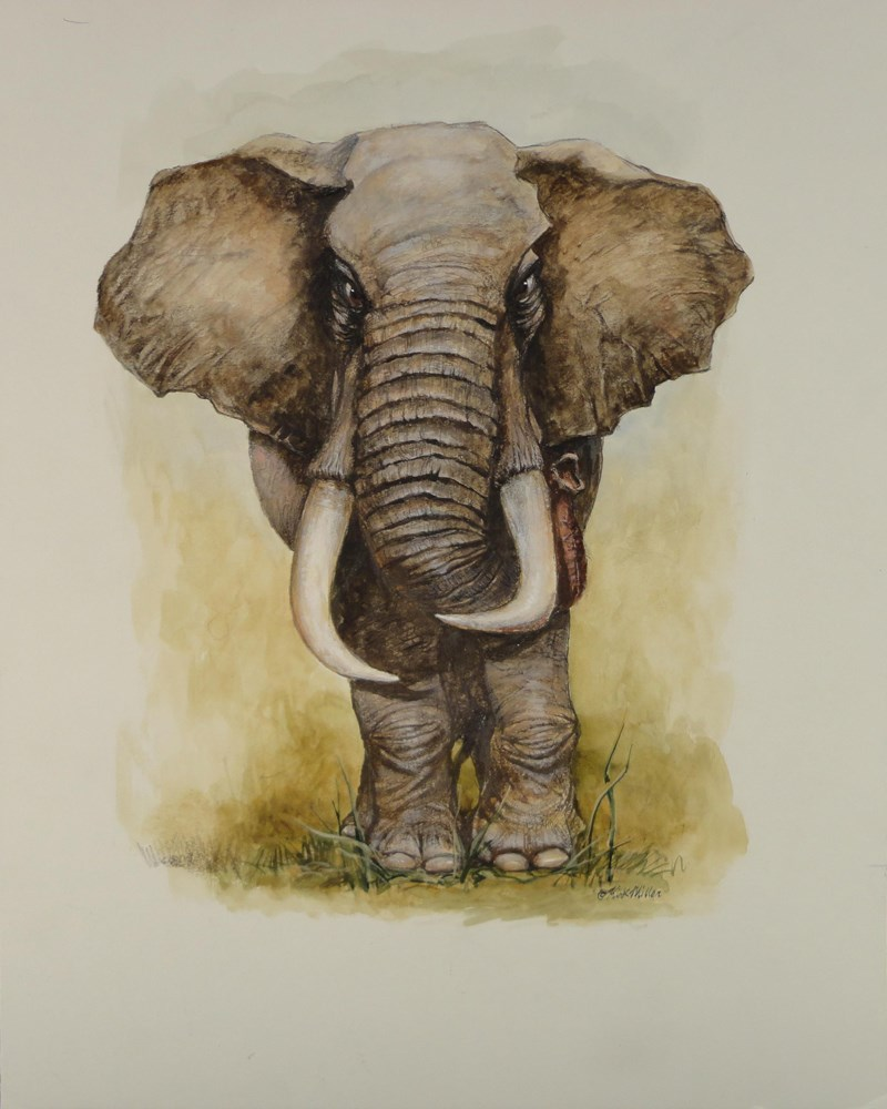 """Bull Elephant"" original fine art by Kirk Miller"