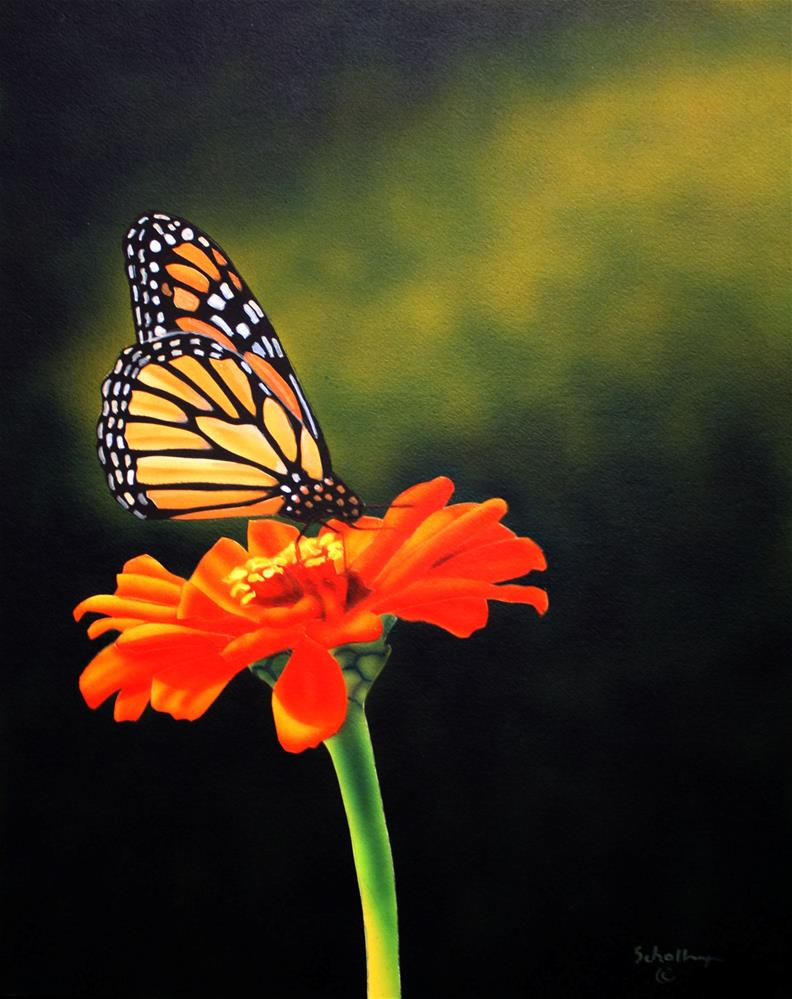 """Monarch and Zinnia in Shadows"" original fine art by Fred Schollmeyer"