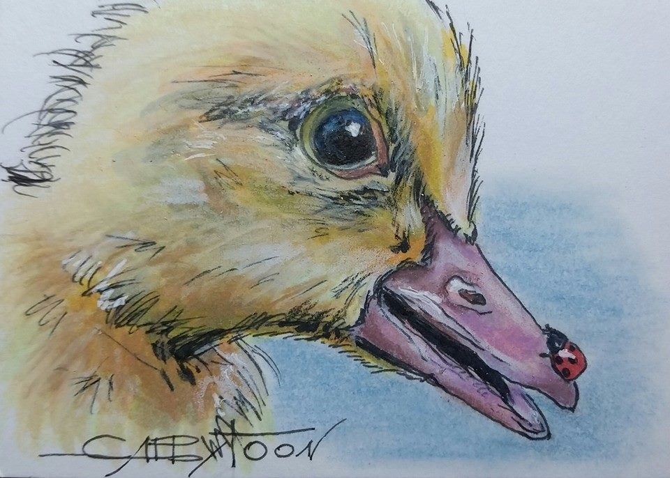 """Duck(ACEO)"" original fine art by Gabriella DeLamater"