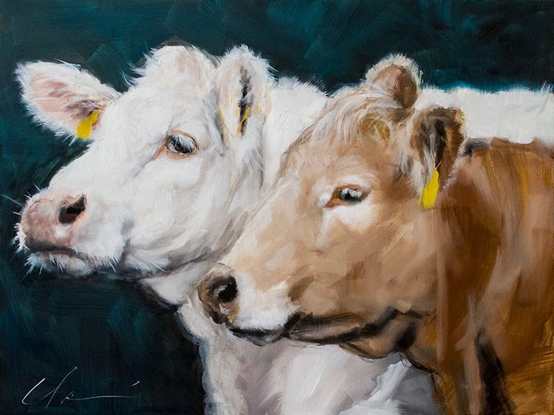 """""""Brown Cow, White Cow"""" original fine art by Clair Hartmann"""